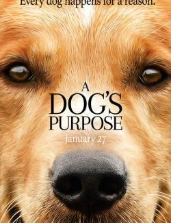 Собачья жизнь / A Dog's Purpose (2017) HD 720 (RU, ENG)